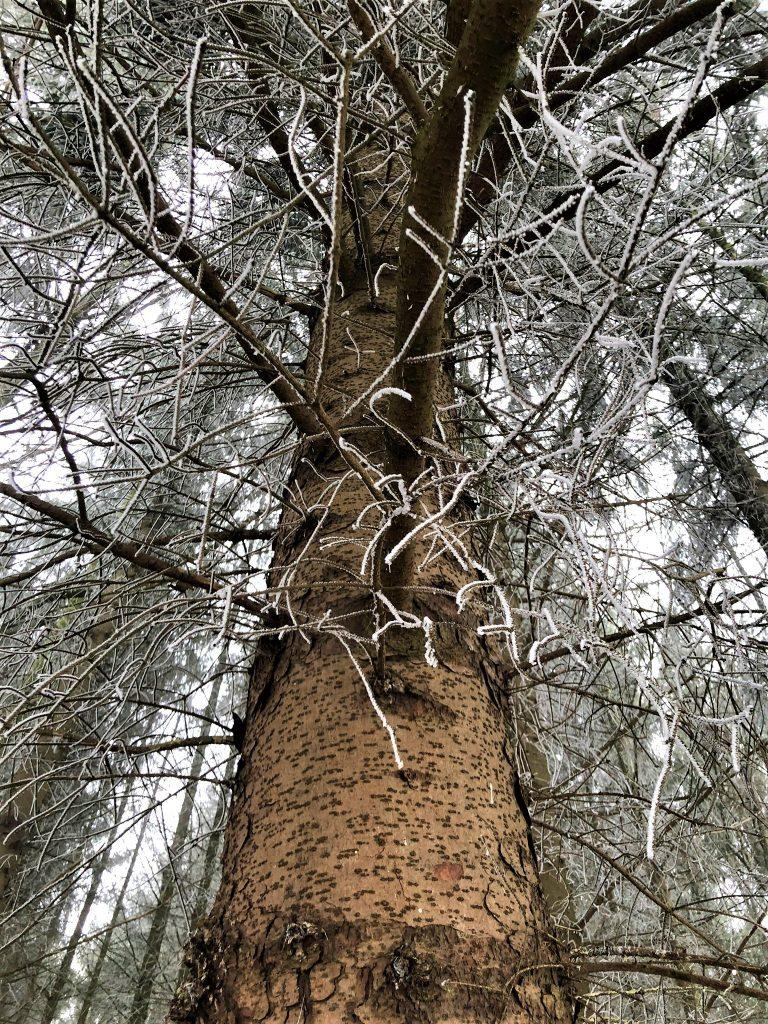 Das Oberholz - Roxin