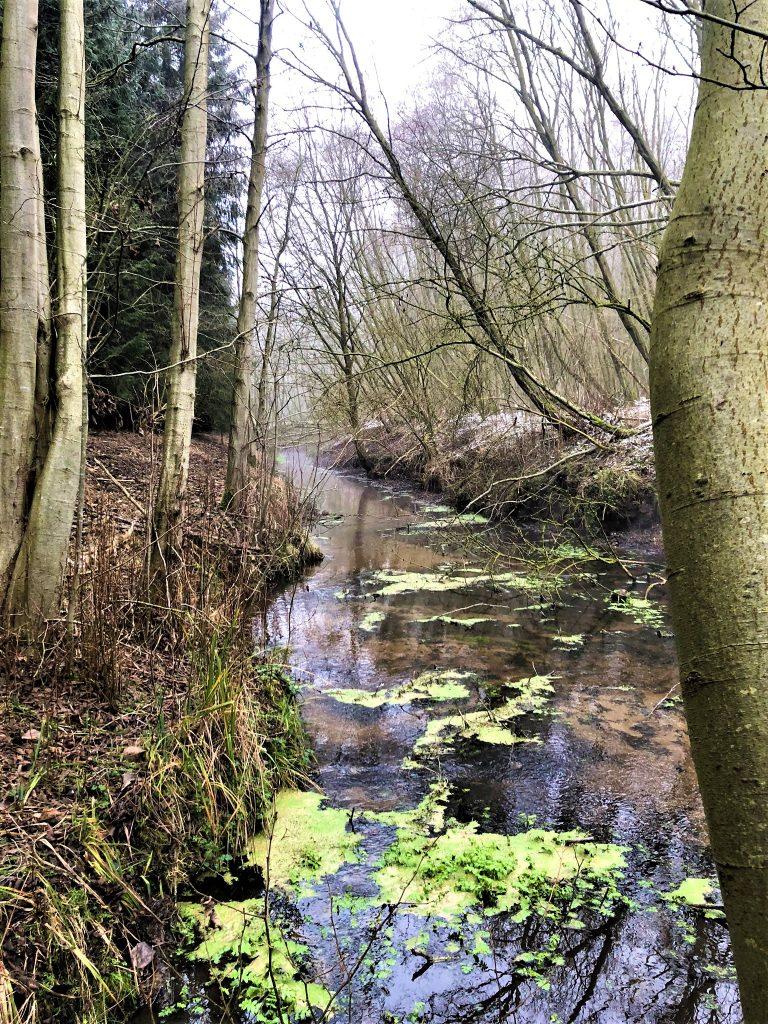 Questiner Wald