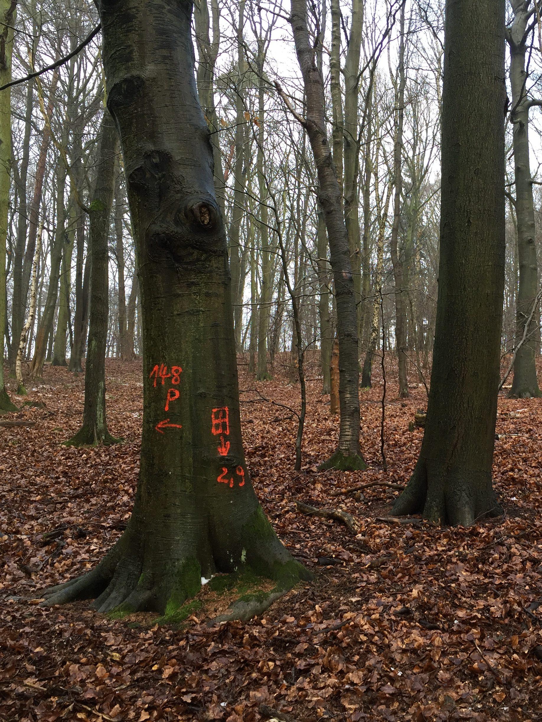 Jameler Forst